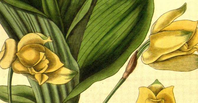 Botanical beauties from the past
