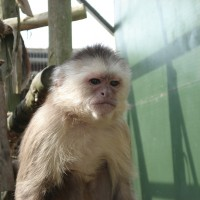 Pause to Watch: Monkeys demand fair pay